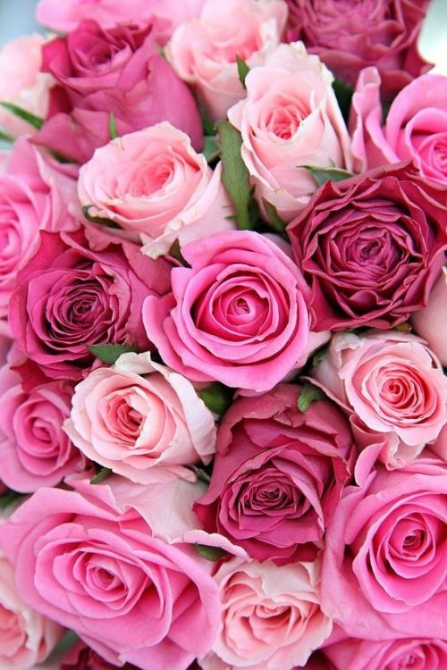 Iphone Rose Rosa Sfondo Reformwiorg