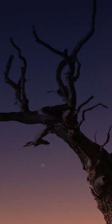 migliori sfondi iPhone X albero