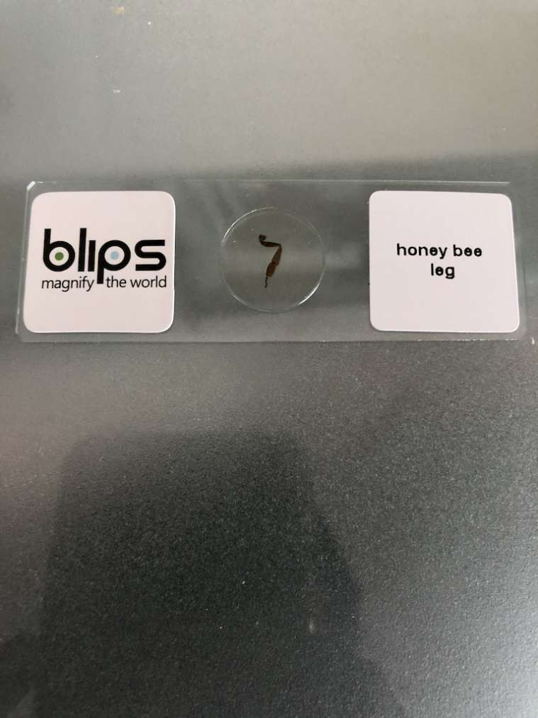 Vetrino lenti Blips zampa ape